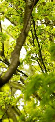 leavesbranch